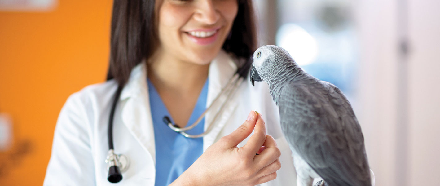 papuga u weterynarza