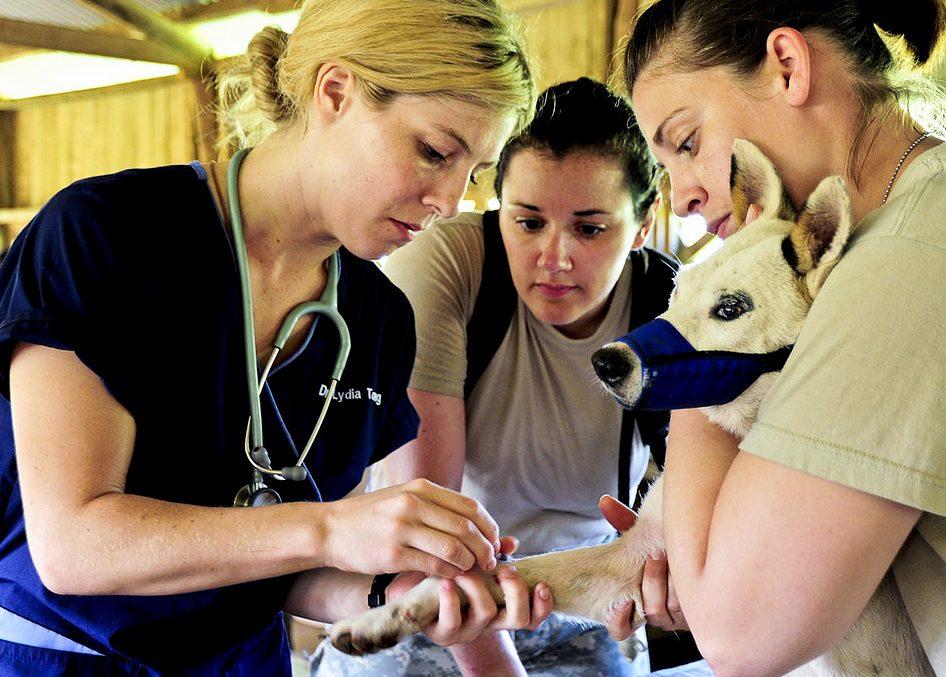 Dezynfekcja rany psa